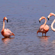 Wild Flamingos Poster by Karen Lindquist