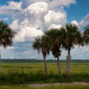 Wild Florida Poster
