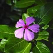 Wild Flower Poster