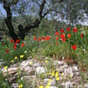 Wild Flowers And Olive Tree Poster