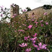 Wild Flowers At The Old Fortress Poster