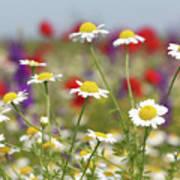 Wild Flowers Field Nature Spring Scene Poster