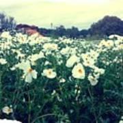 Wild Flowers White Poster