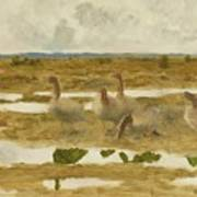 Wild Geese In The Marsh Poster