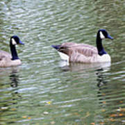 Wild Geese On A Lake 6 Poster