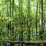 Wild Goose Woods Pond Vii Poster