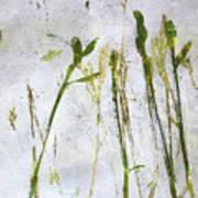 Wild Grass 2 Poster