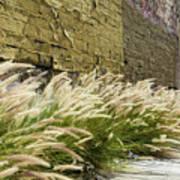 Wild Grass Along An Alley Wall Poster