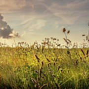Wild Grass And A Lonely Cloud Poster