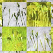 Wild Grass Collage 3 Poster