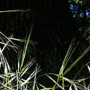Wild Grass In The Sunlight Poster