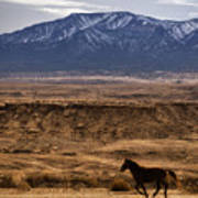 Wild Horse On The Run Poster
