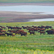 Wild Horses #34 Poster