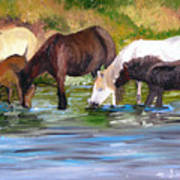 Wild Horses At The Watering Hole Poster