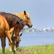 Wild Horses Of Assateaque Poster