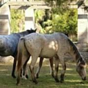 Wild Horses Of Cumberland Poster