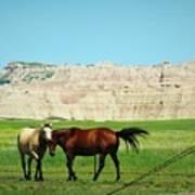 Wild Horses Of South Dakota Poster