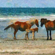Wild Horses Of The Outer Banks Poster