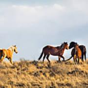 Wild Horses On The Bisti Poster