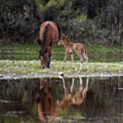 Wild Horses Reflected In The Salt River Poster