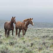 Wild Horses - Steens 1 Rw Poster