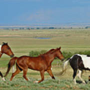 Wild Horses Wyoming Poster