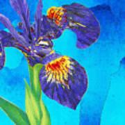 Wild Iris Art By Sharon Cummings Poster