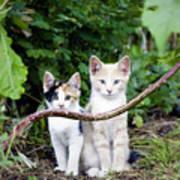 Wild Kats Poster