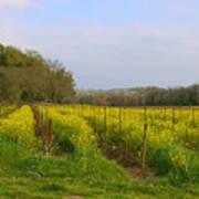 Wild Mustard Fields Poster