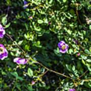 Wild Rose Habitat Poster