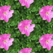 Wild Rose Pattern Poster