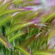 Wild Summer Grass Poster