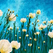 Poppies In The Blue Sky Poster