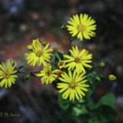 Wild Yellow Flowers Poster