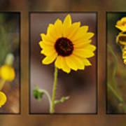 Wildflower 3 Poster