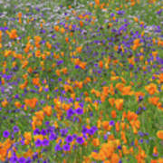 Wildflower Dream Poster