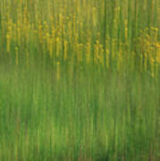 Wildflower Fields Abstract Poster