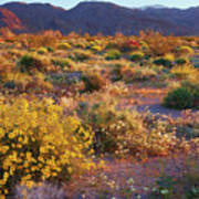 Wildflower Meadow At Joshua Tree National Park Poster