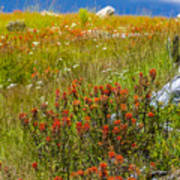 Wildflower Meadow With Indian Paintbrush Poster
