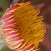 Wildflower Poster