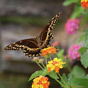 Wildflower Swallowtail Poster