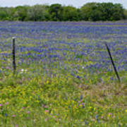 Wildflowers - Blue Horizon Poster