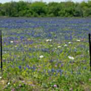 Wildflowers - Blue Horizon Too Poster