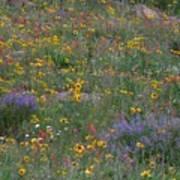 Wildflowers Abundance Poster