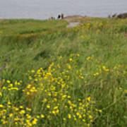 Wildflowers At Cape Spear Poster