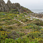 Wildflowers At China Rock - Pebble Beach - California Poster