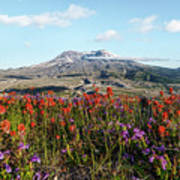 Wildflowers At Mount St Helens Poster