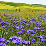 Wildflowers Carrizo Plain Poster