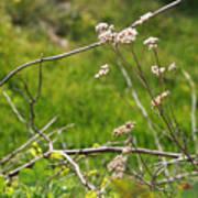 Wildflowers Marblehead Massachusetts Poster