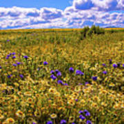 Wildflowers Of The Carrizo Plain Superbloom 2017 Poster